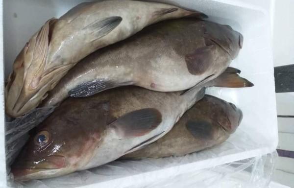Abadeche grouper