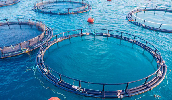 Farmed Fishs